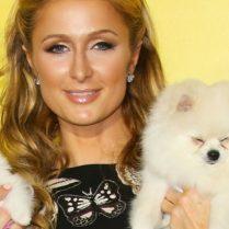 Inside Paris Hilton Spanish-Style Dog House